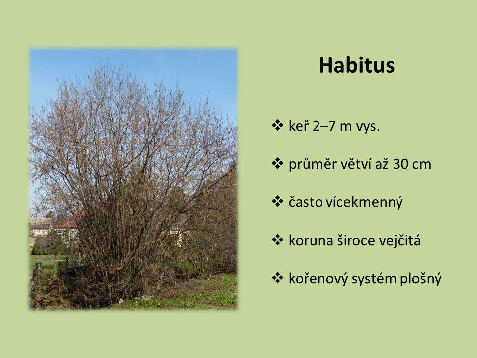 Habitus keř 2–7 m vys. průměr větví až 30 cm často vícekmenný