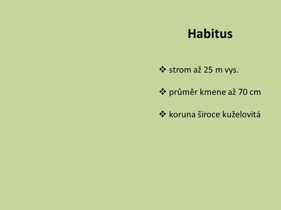 Habitus strom až 25 m vys. průměr kmene až 70 cm