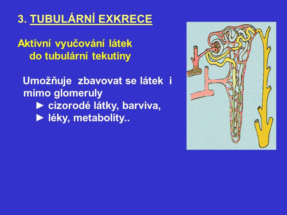 3. TUBULÁRNÍ EXKRECE Aktivní vyučování látek do tubulární tekutiny