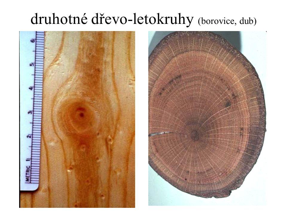 druhotné dřevo-letokruhy (borovice, dub)