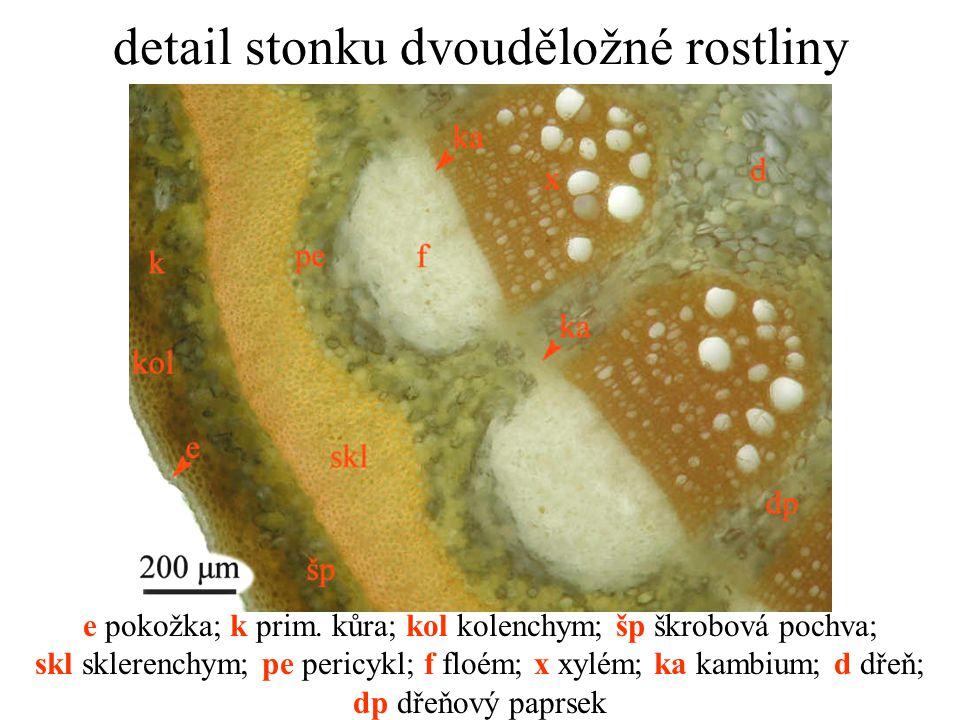 detail stonku dvouděložné rostliny