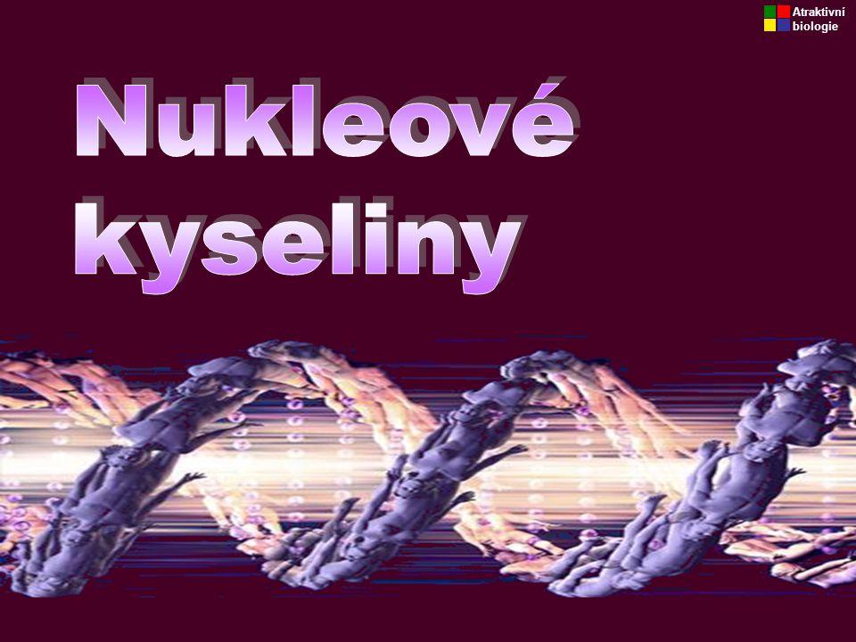Atraktivní biologie Nukleové kyseliny