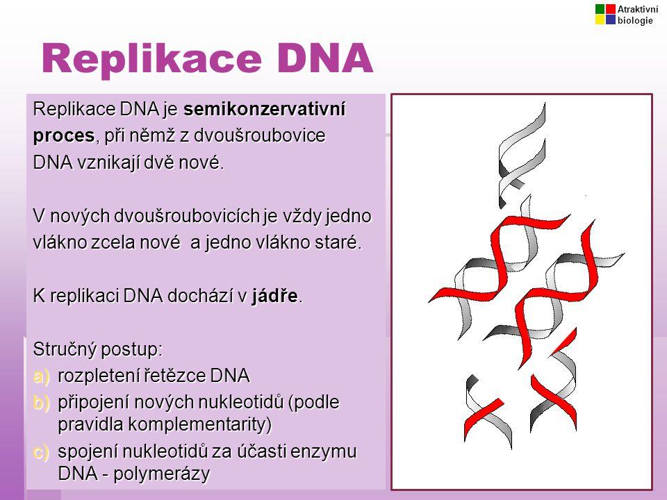 Replikace DNA Replikace DNA je semikonzervativní