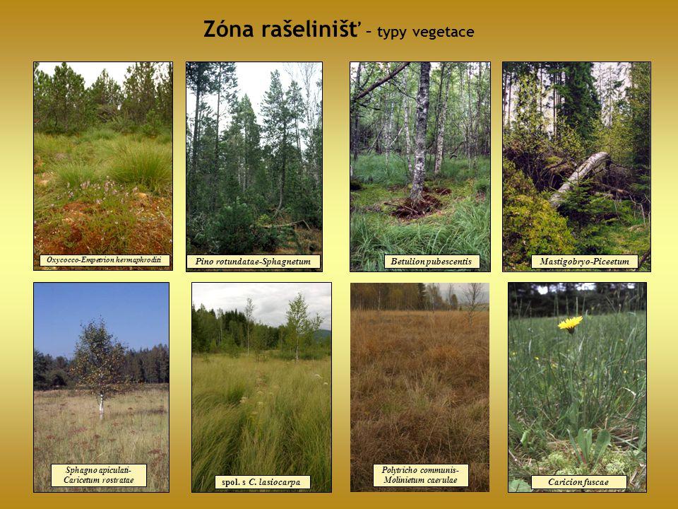 Zóna rašelinišť – typy vegetace