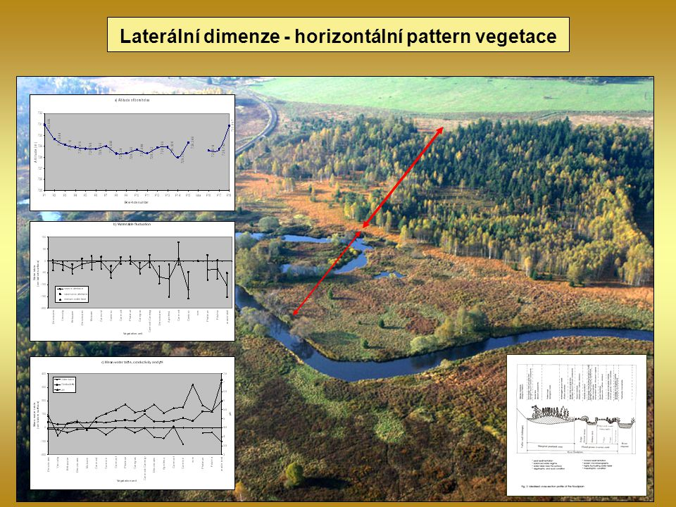 Laterální dimenze - horizontální pattern vegetace