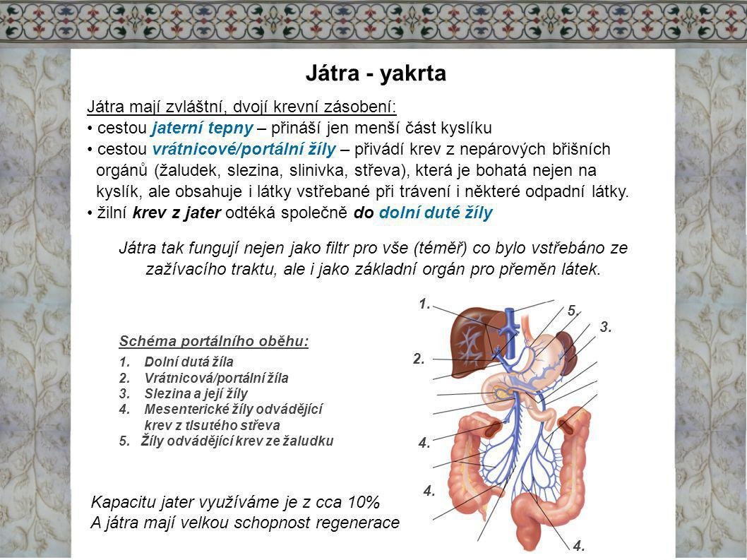 Játra - yakrta Játra mají zvláštní, dvojí krevní zásobení: