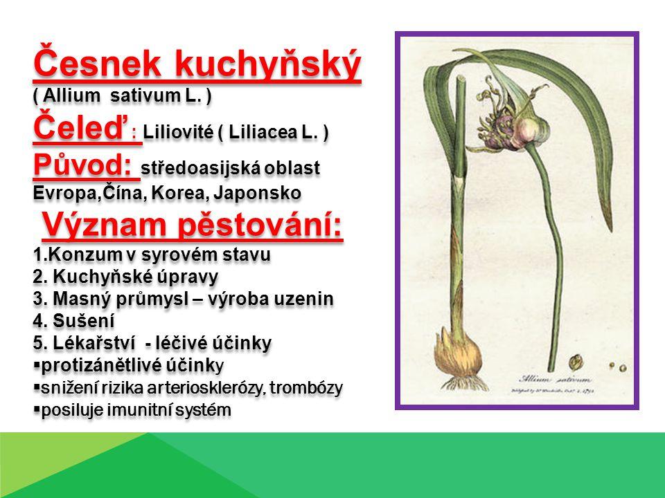 Česnek kuchyňský Čeleď : Liliovité ( Liliacea L. ) Význam pěstování: