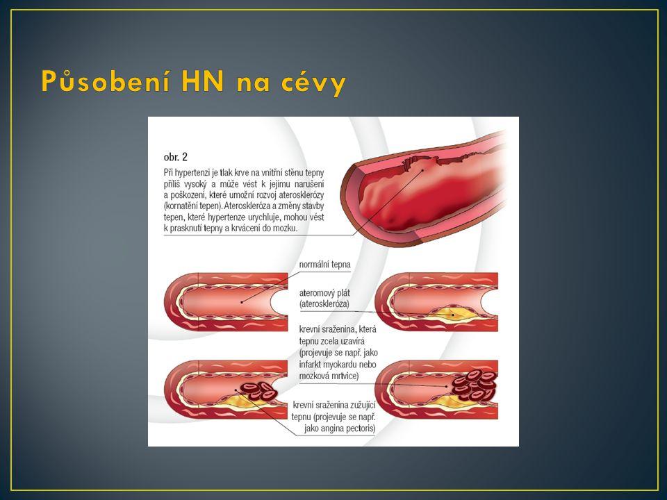 Působení HN na cévy