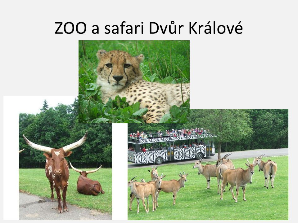ZOO a safari Dvůr Králové