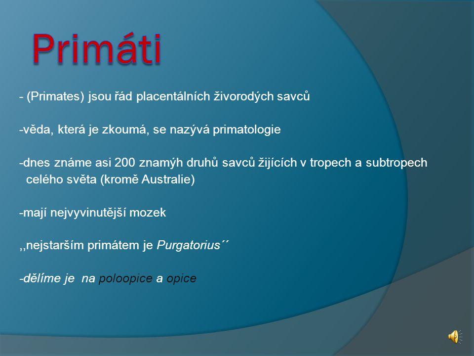 Primáti - (Primates) jsou řád placentálních živorodých savců