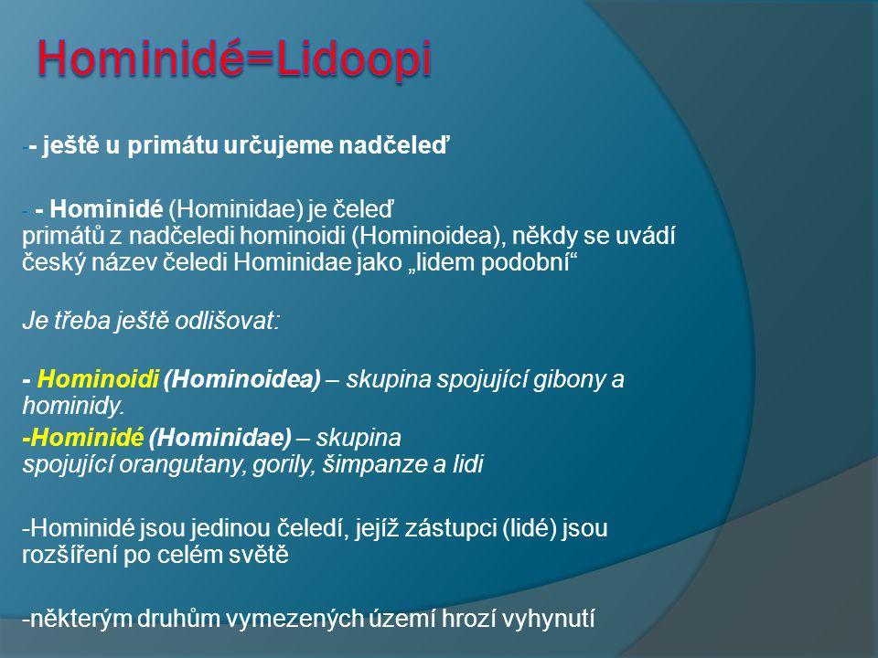 Hominidé=Lidoopi - ještě u primátu určujeme nadčeleď