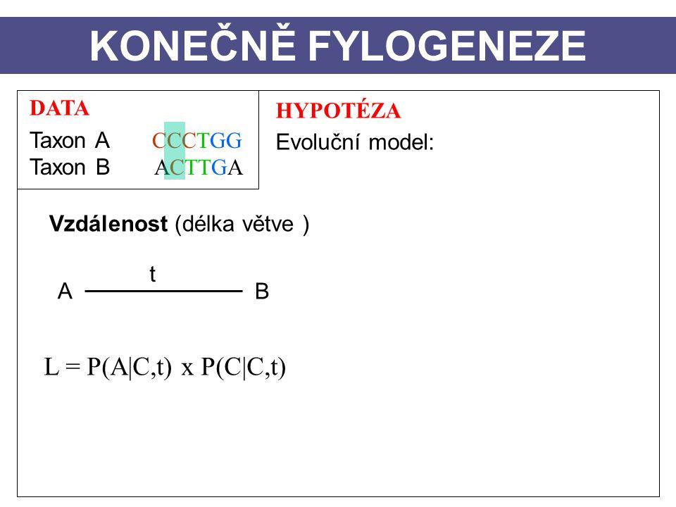 KONEČNĚ FYLOGENEZE L = P(A|C,t) x P(C|C,t) DATA