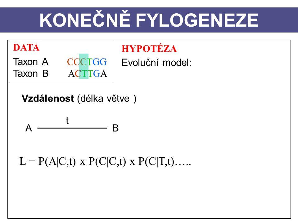 KONEČNĚ FYLOGENEZE L = P(A|C,t) x P(C|C,t) x P(C|T,t)….. DATA