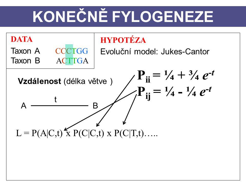 KONEČNĚ FYLOGENEZE Pii = ¼ + ¾ e-t Pij = ¼ - ¼ e-t