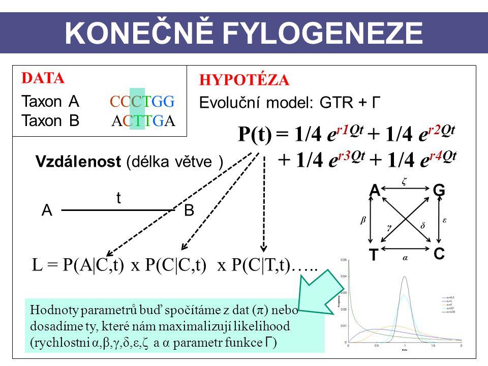 KONEČNĚ FYLOGENEZE P(t) = 1/4 er1Qt + 1/4 er2Qt