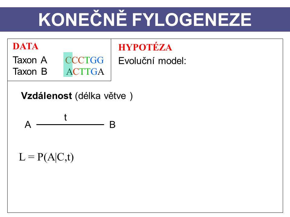 KONEČNĚ FYLOGENEZE L = P(A|C,t) DATA Taxon A CCCTGG Taxon B ACTTGA