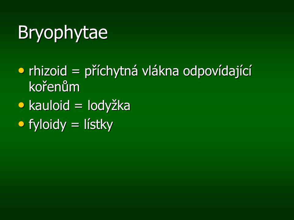 Bryophytae rhizoid = příchytná vlákna odpovídající kořenům