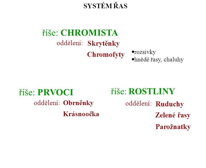 říše: CHROMISTA říše: PRVOCI říše: ROSTLINY Skrytěnky Chromofyty