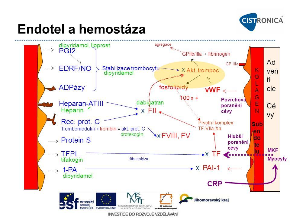 Endotel a hemostáza PGI2 EDRF/NO Ad ven ti cie Cé vy x ADPázy vWF