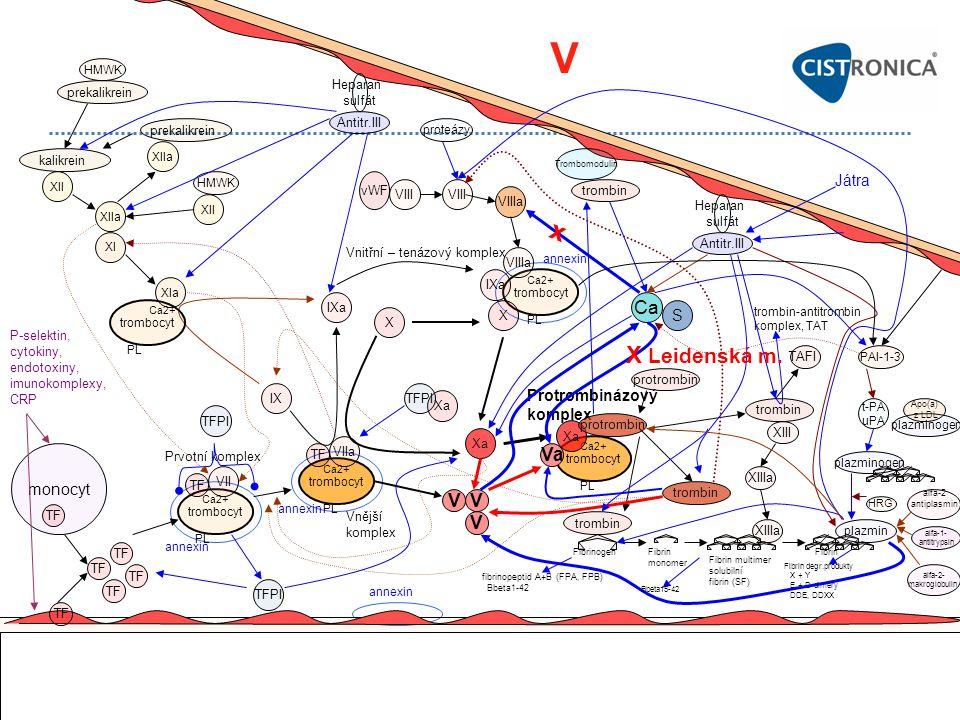 V x X Leidenská m. Ca Va V V V Játra S Protrombinázový komplex monocyt