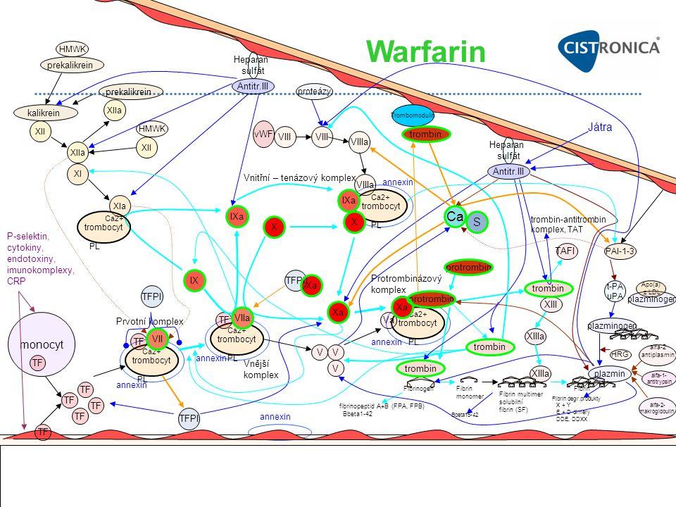 Warfarin Ca Játra S monocyt Heparan sulfát prekalikrein Antitr.III