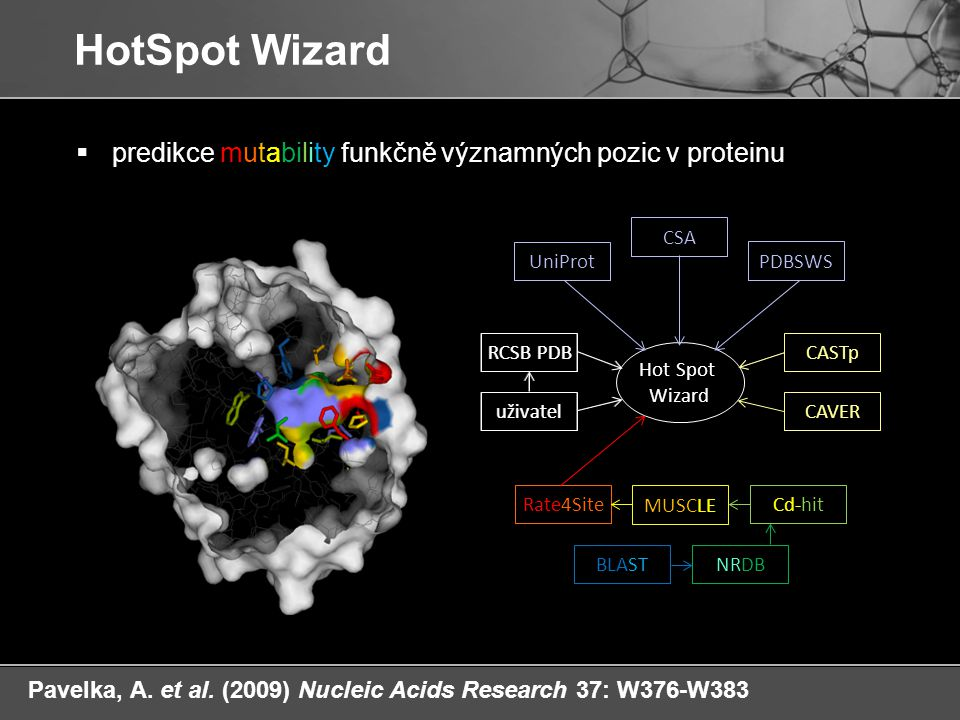 HotSpot Wizard predikce mutability funkčně významných pozic v proteinu