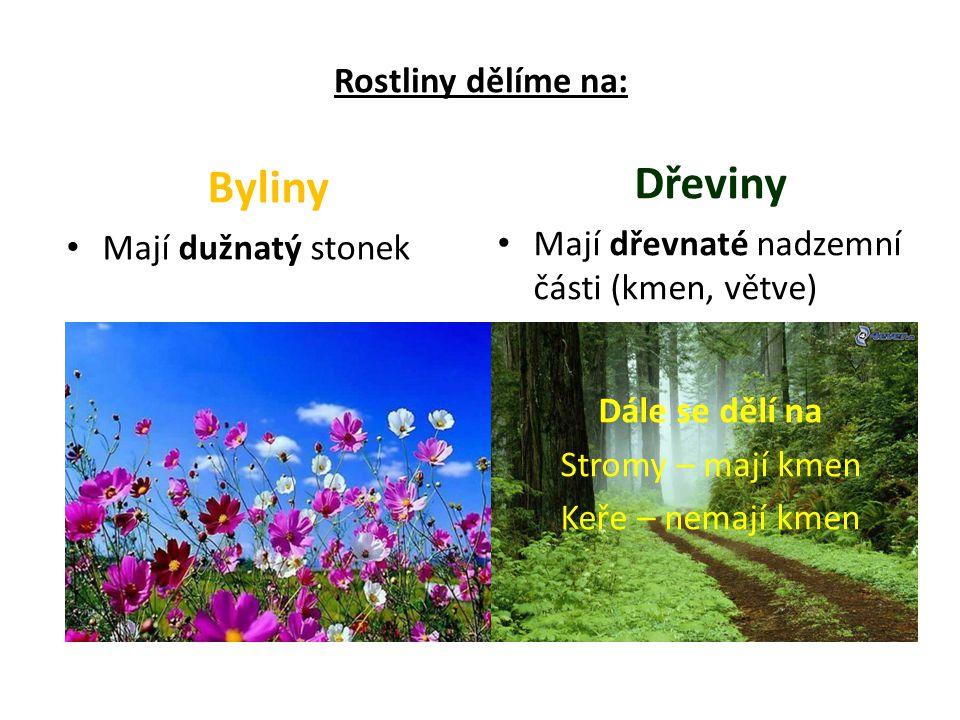 Dřeviny Byliny Rostliny dělíme na: