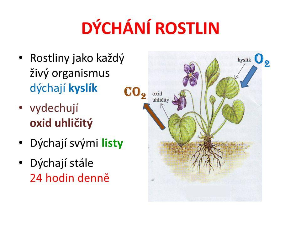 DÝCHÁNÍ ROSTLIN Rostliny jako každý živý organismus dýchají kyslík. vydechují. oxid uhličitý. Dýchají svými listy.