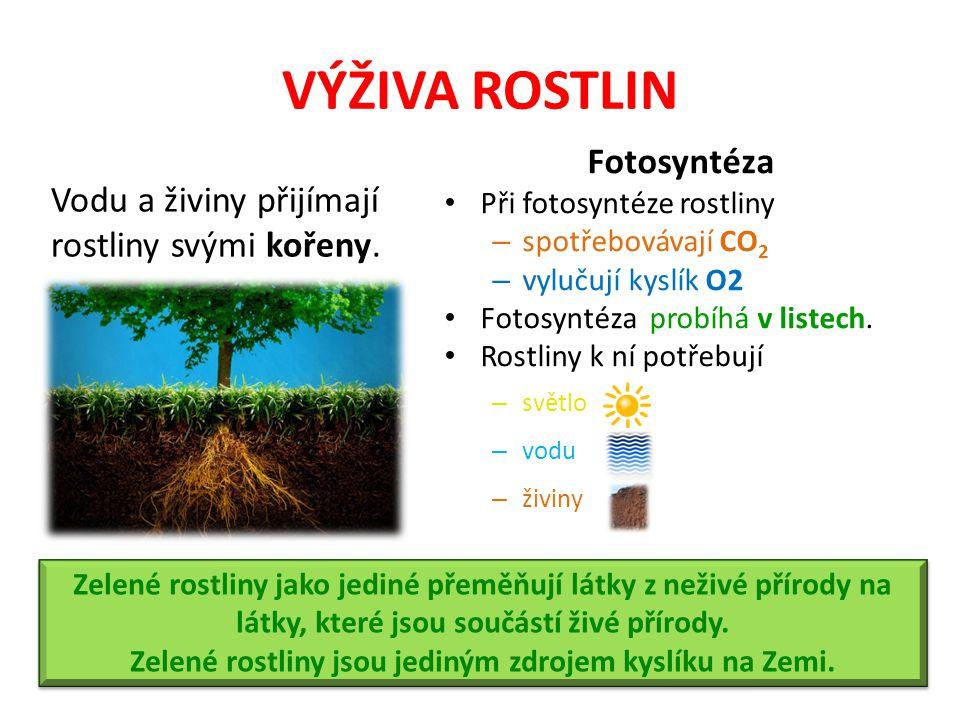 Zelené rostliny jsou jediným zdrojem kyslíku na Zemi.
