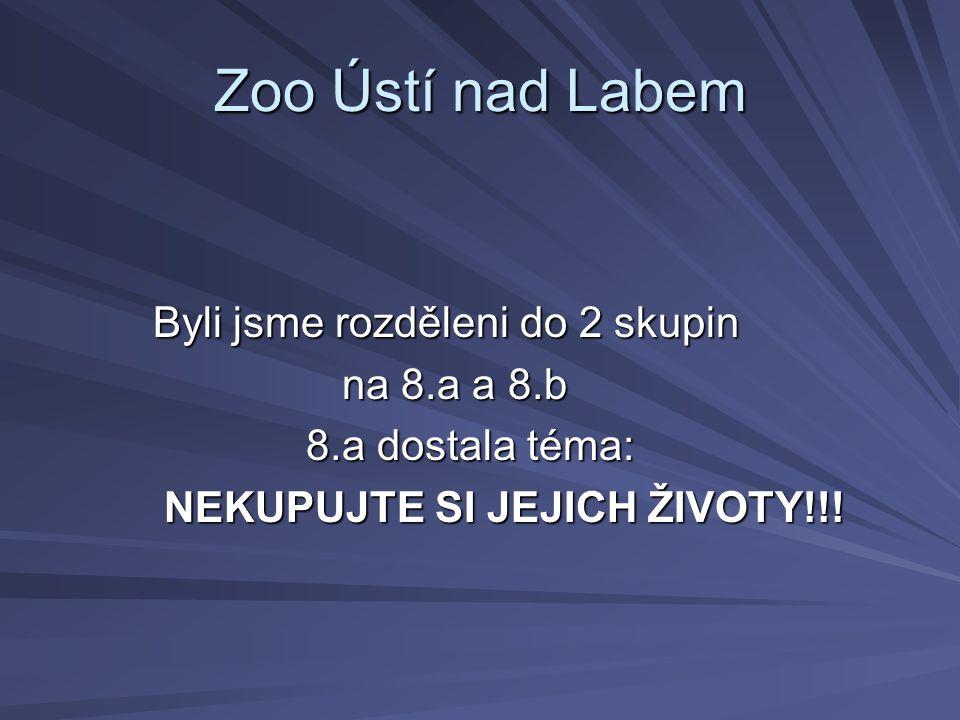 Zoo Ústí nad Labem Byli jsme rozděleni do 2 skupin na 8.a a 8.b