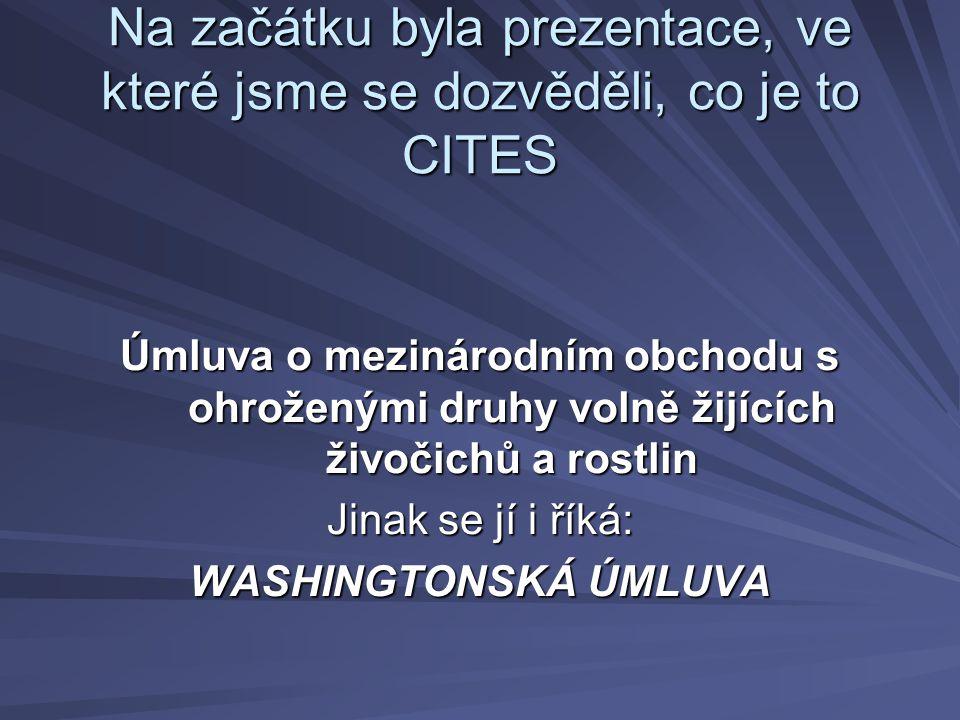 Na začátku byla prezentace, ve které jsme se dozvěděli, co je to CITES