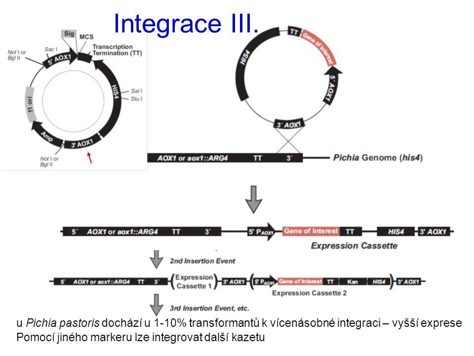 Integrace III. u Pichia pastoris dochází u 1-10% transformantů k vícenásobné integraci – vyšší exprese.