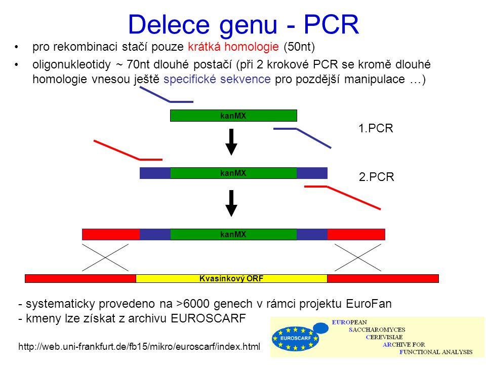 Delece genu - PCR pro rekombinaci stačí pouze krátká homologie (50nt)