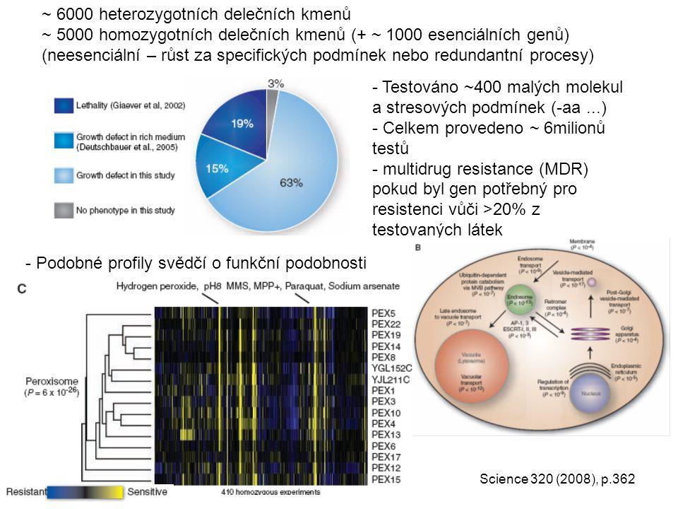 ~ 6000 heterozygotních delečních kmenů