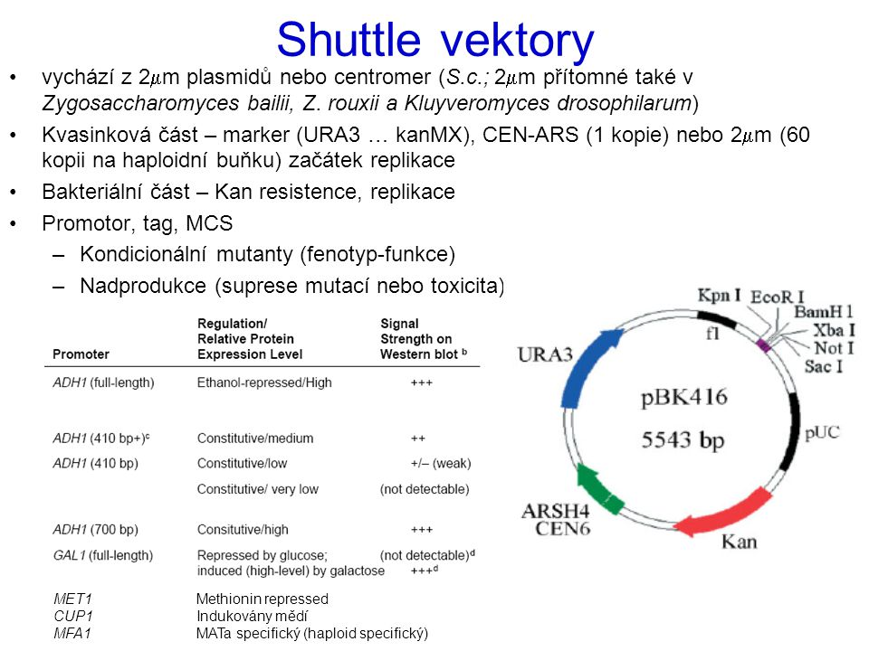 Shuttle vektory vychází z 2mm plasmidů nebo centromer (S.c.; 2mm přítomné také v Zygosaccharomyces bailii, Z. rouxii a Kluyveromyces drosophilarum)