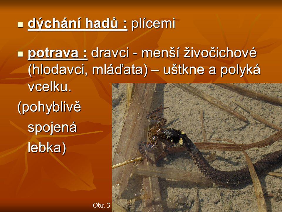 dýchání hadů : plícemi potrava : dravci - menší živočichové (hlodavci, mláďata) – uštkne a polyká vcelku.