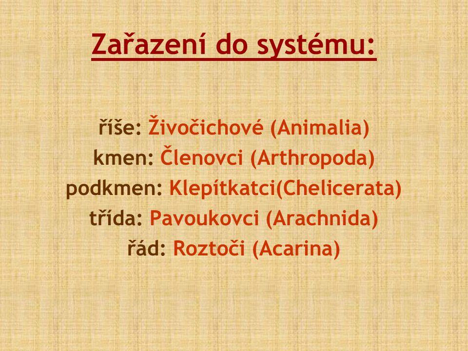 Zařazení do systému: říše: Živočichové (Animalia)