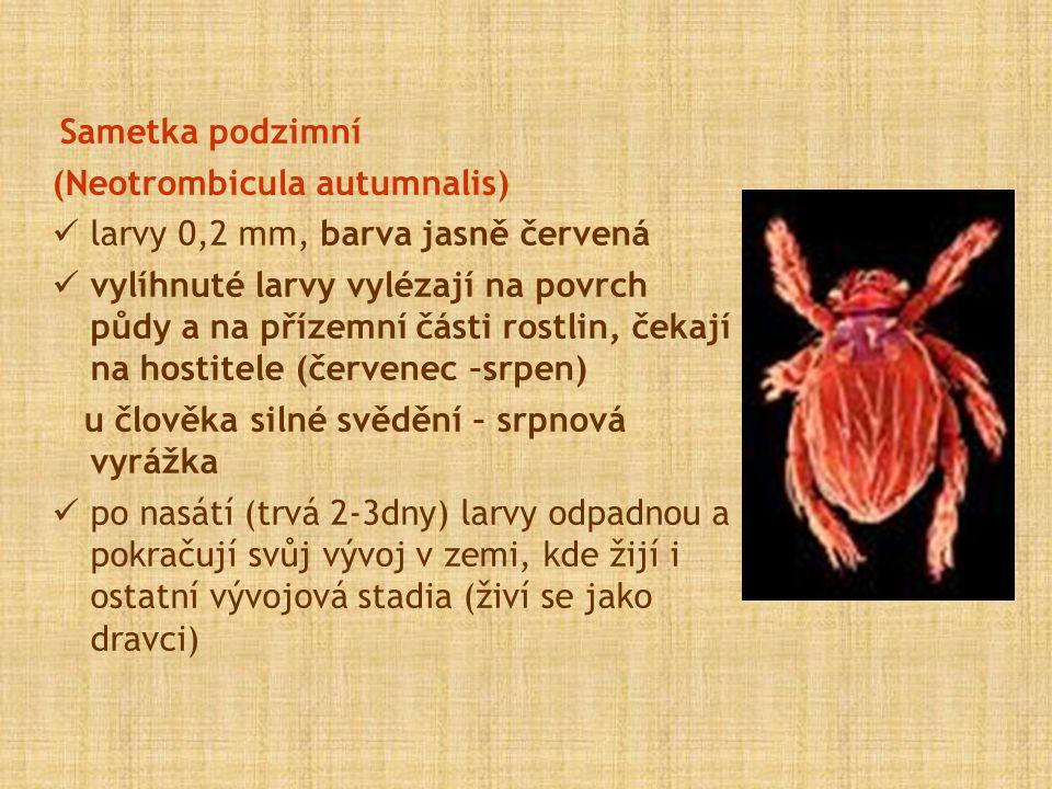 (Neotrombicula autumnalis) larvy 0,2 mm, barva jasně červená