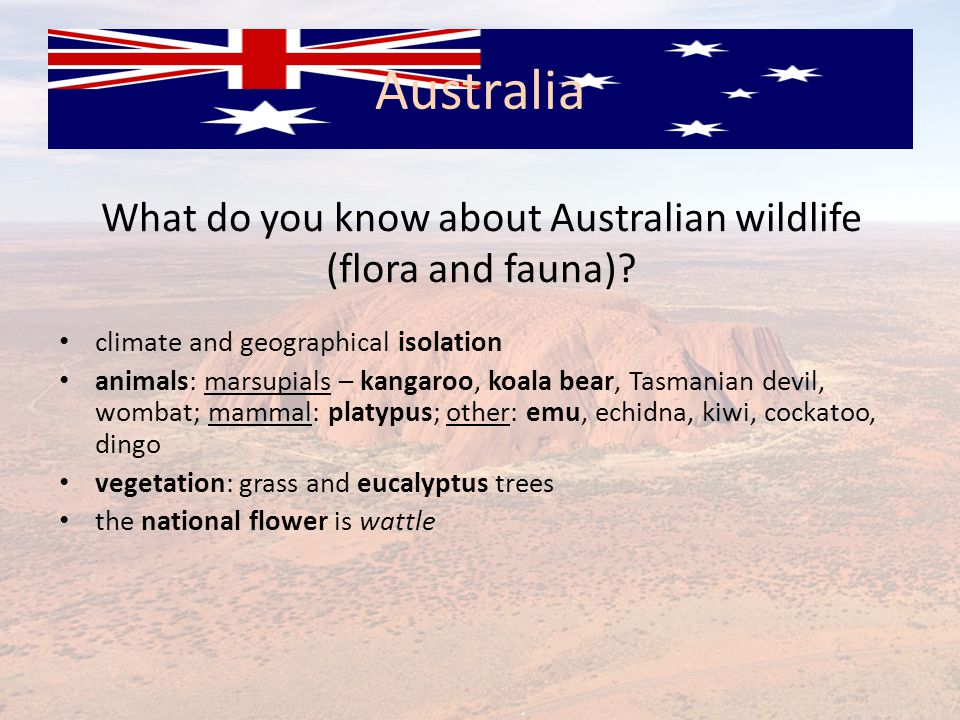What do you know about Australian wildlife (flora and fauna)