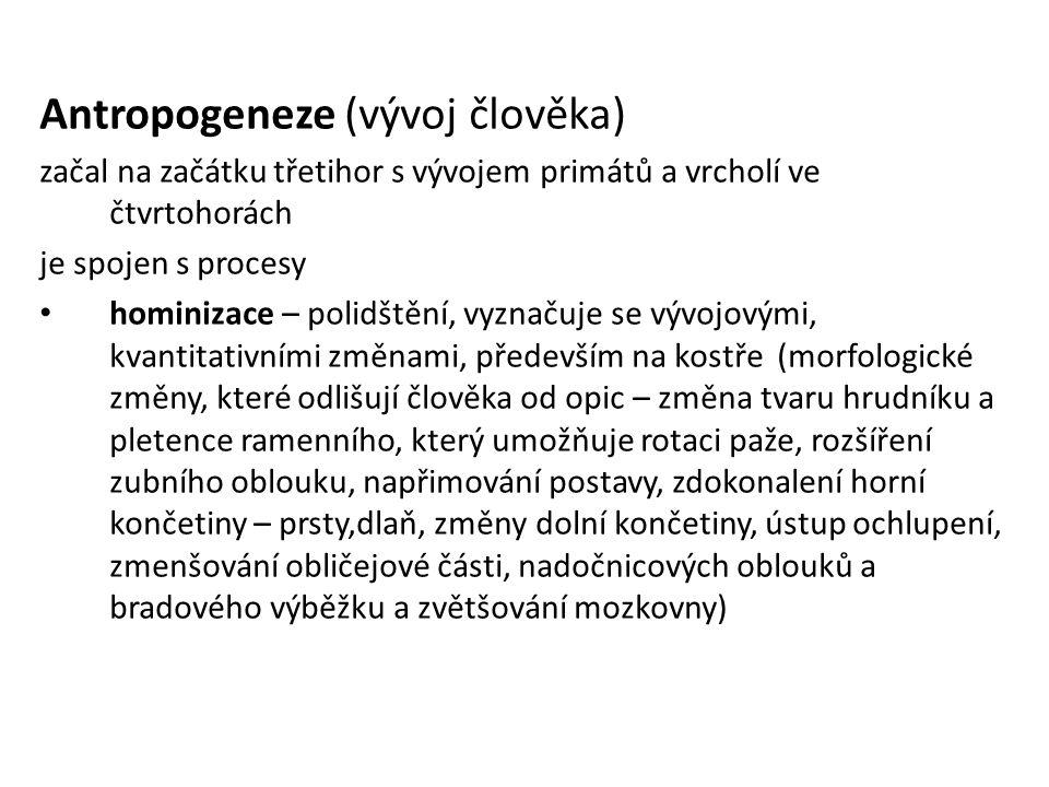 Antropogeneze (vývoj člověka)