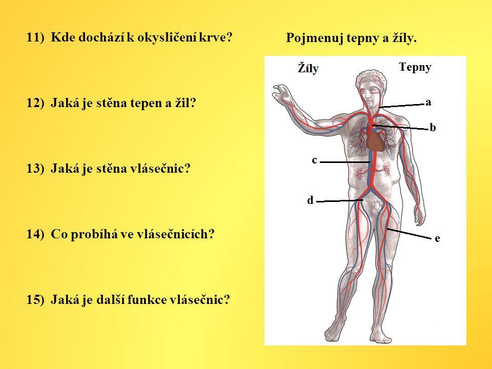 Kde dochází k okysličení krve