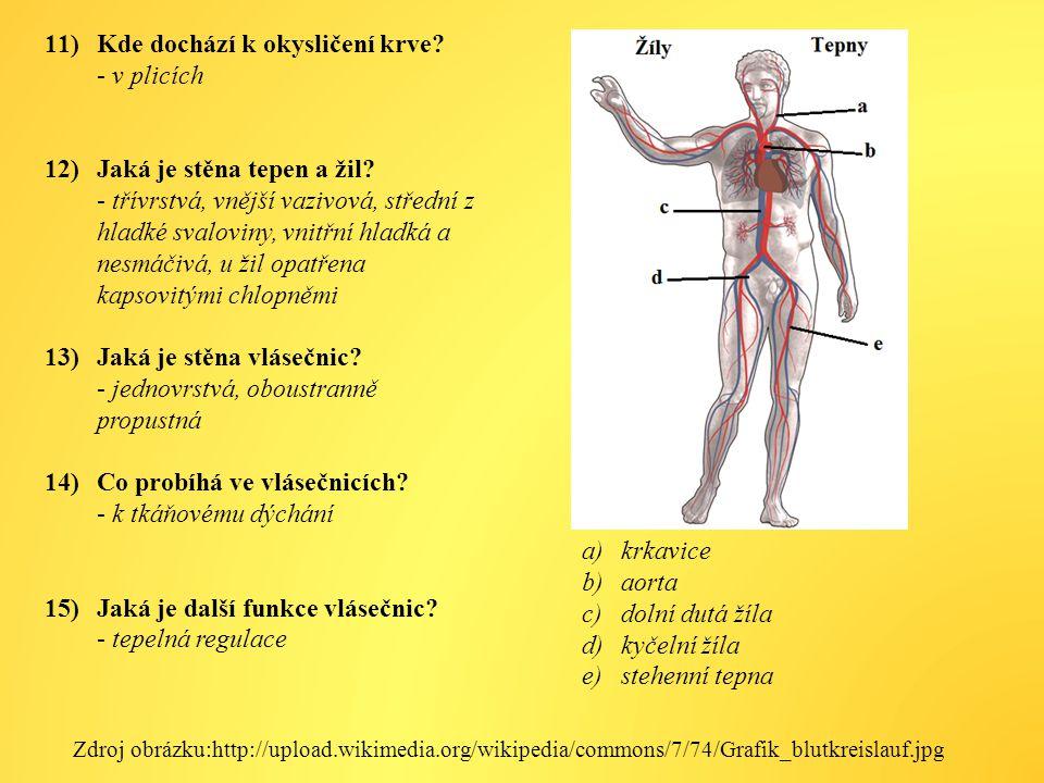 Kde dochází k okysličení krve - v plicích