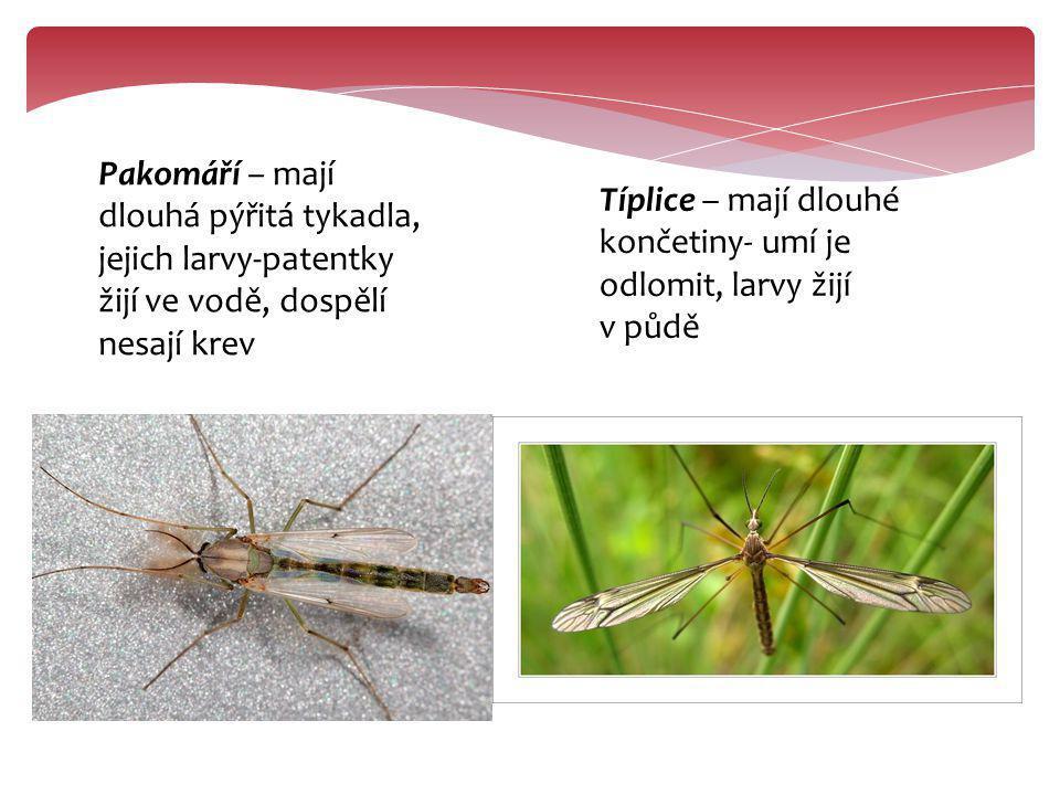 Pakomáří – mají dlouhá pýřitá tykadla, jejich larvy-patentky žijí ve vodě, dospělí nesají krev