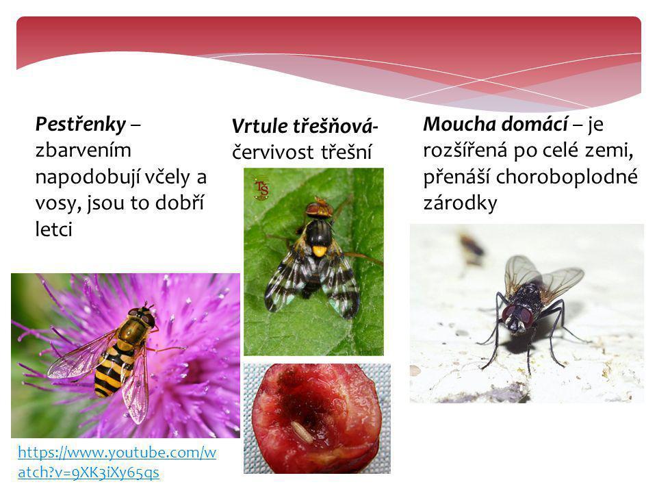 Pestřenky – zbarvením napodobují včely a vosy, jsou to dobří letci