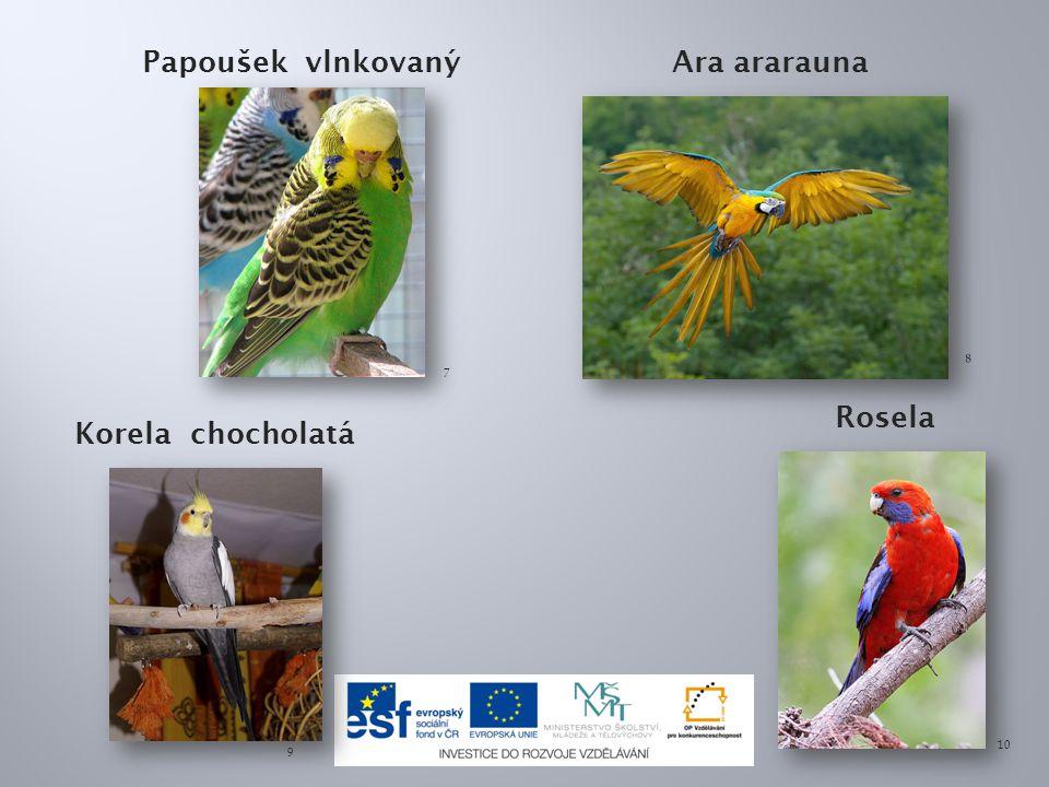 Papoušek vlnkovaný Ara ararauna Rosela Korela chocholatá