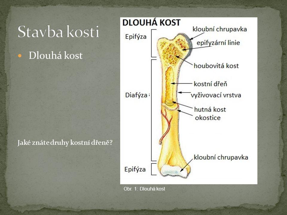 Stavba kosti Dlouhá kost Jaké znáte druhy kostní dřeně