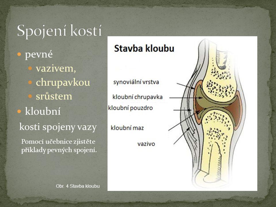 Spojení kostí pevné vazivem, chrupavkou srůstem kloubní
