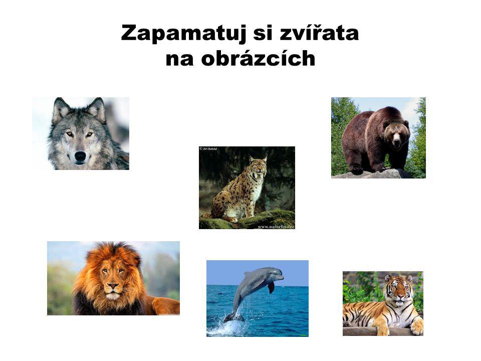 Zapamatuj si zvířata na obrázcích