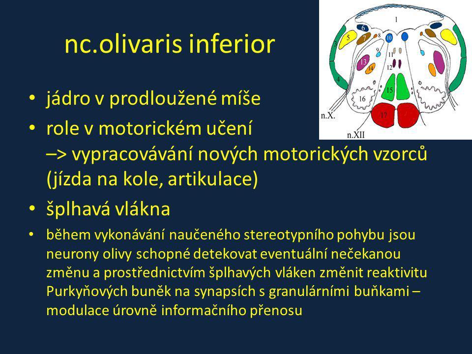 nc.olivaris inferior jádro v prodloužené míše