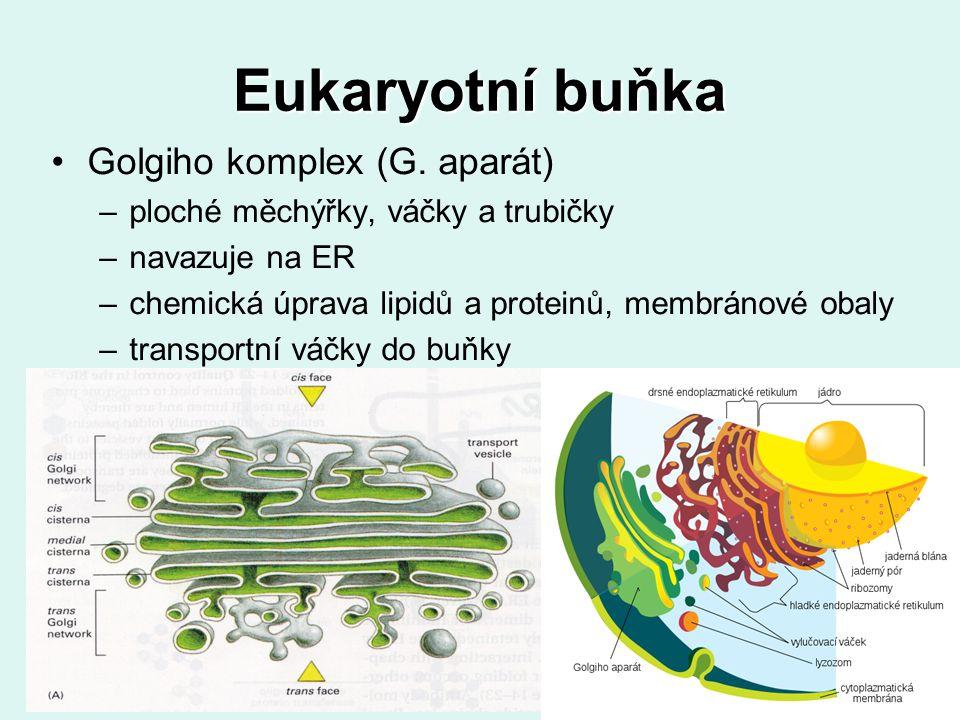 Eukaryotní buňka Golgiho komplex (G. aparát)